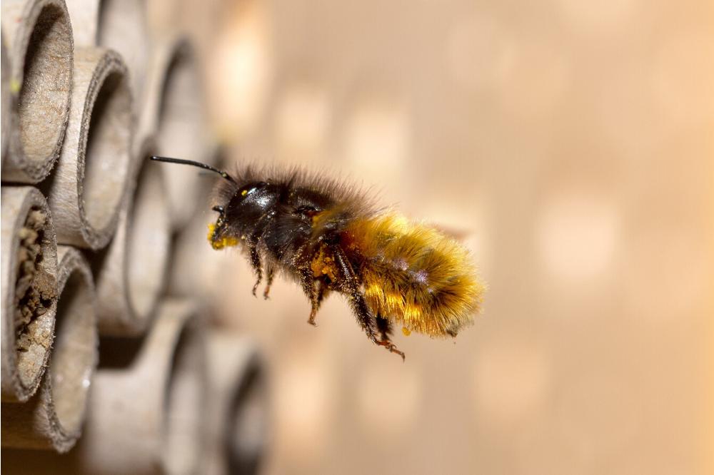 Biene fliegt in Insektenhotel