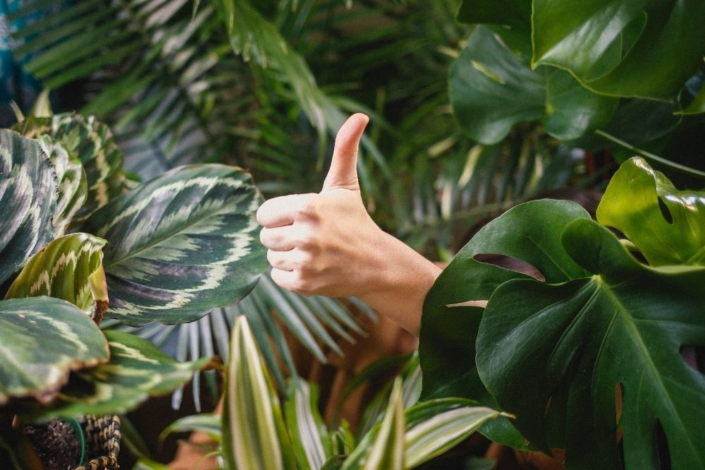 Urban Jungle Zimmerpflanzen mit Daumen hoch