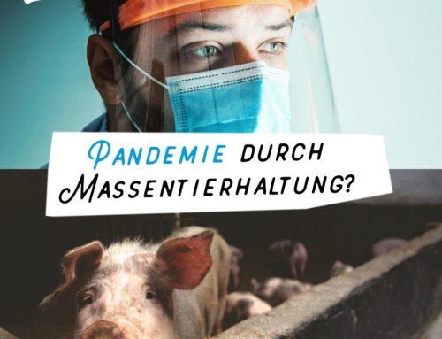 Pandemie durch Massentierhaltung? Das kannst Du dagegen tun.