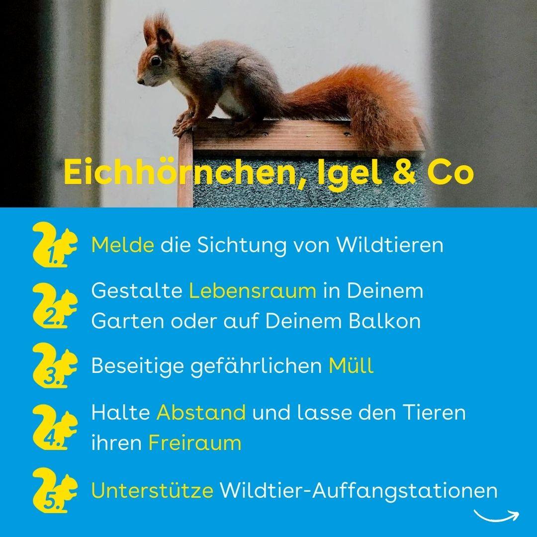 Eichhörnchen helfen