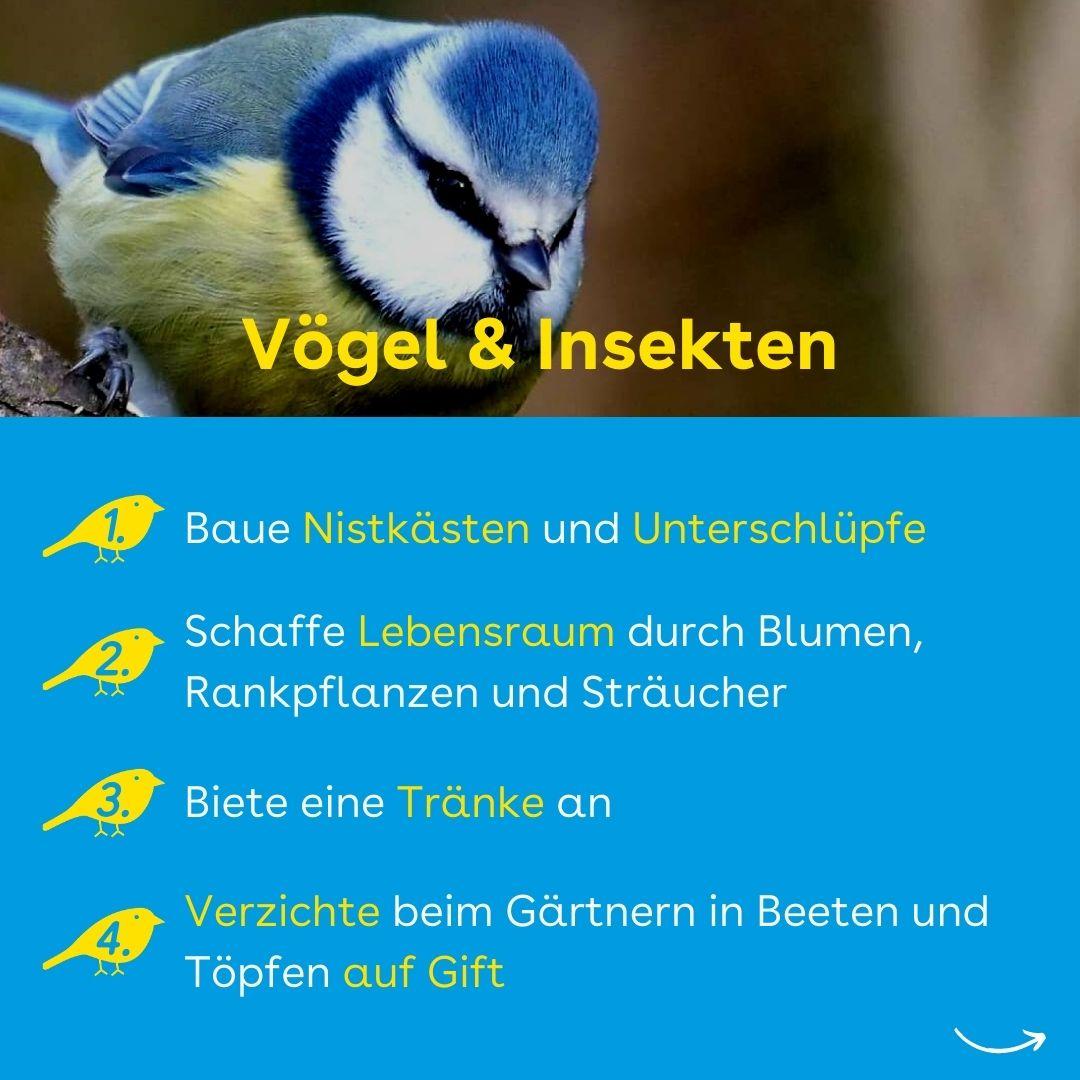 Vögel & Insekten in der Stadt