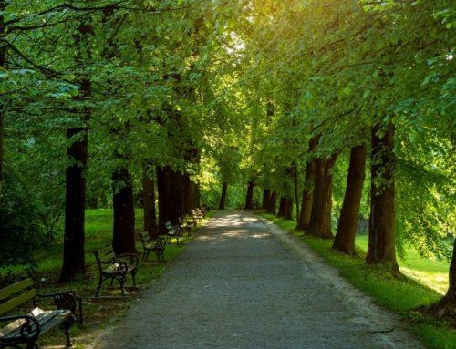 Bäume in der Stadt: So kannst Du ihnen helfen