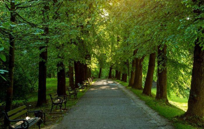 Bäume in der Stadt in einem Stadtpark