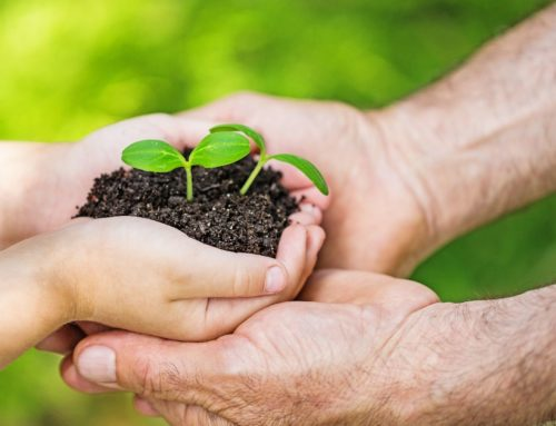Solidarische Landwirtschaft: 3 Projekte