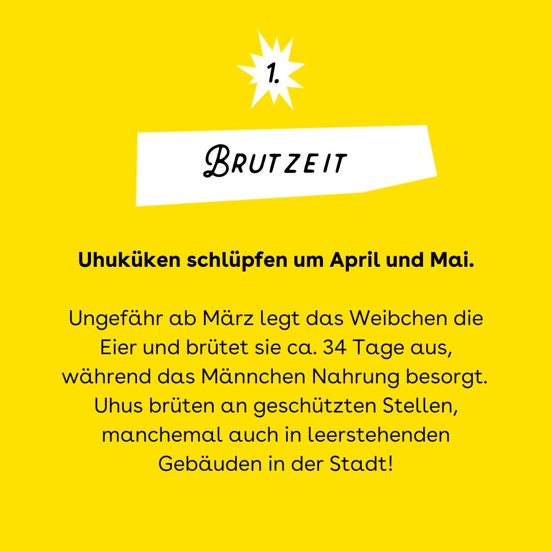 Uhu Brutzeit