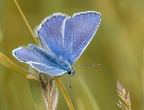 Schmetterlinge in Gefahr: Fakten und Tipps