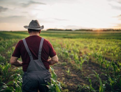 Nachhaltige Landwirtschaft: So schützt Carbon Farming unsere Natur