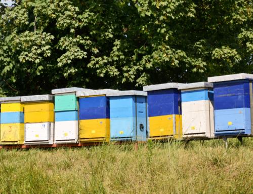 Massenprodukt Honig: Das solltest Du wissen