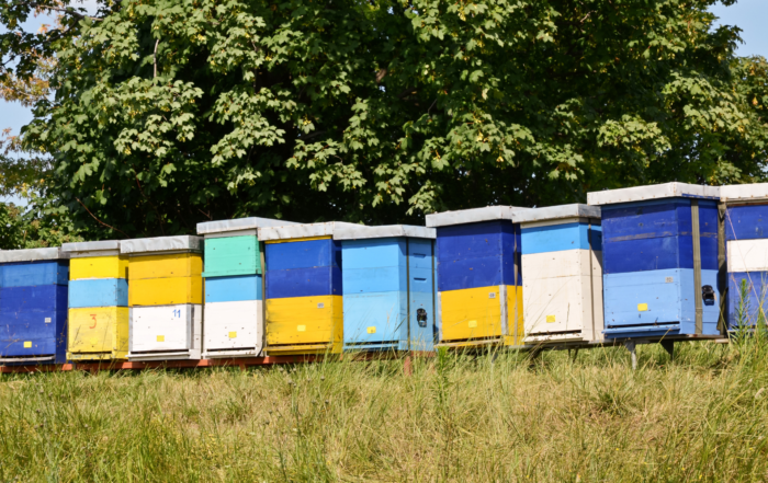 bienenfreundlicher Honig