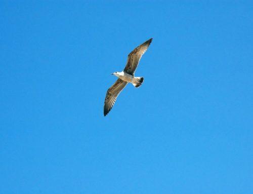 Vögel in der Stadt beobachten