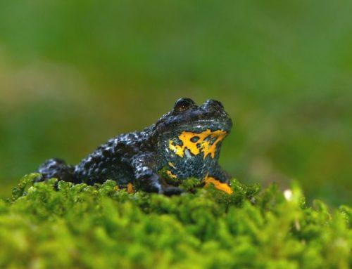 Amphibien schützen: So gehts!