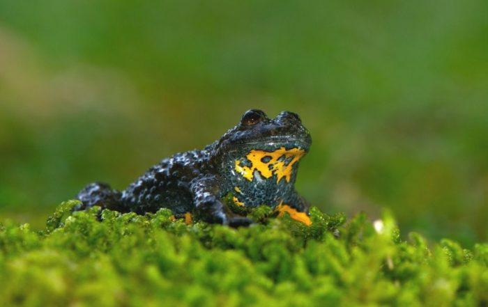 So schützt Du Amphibien