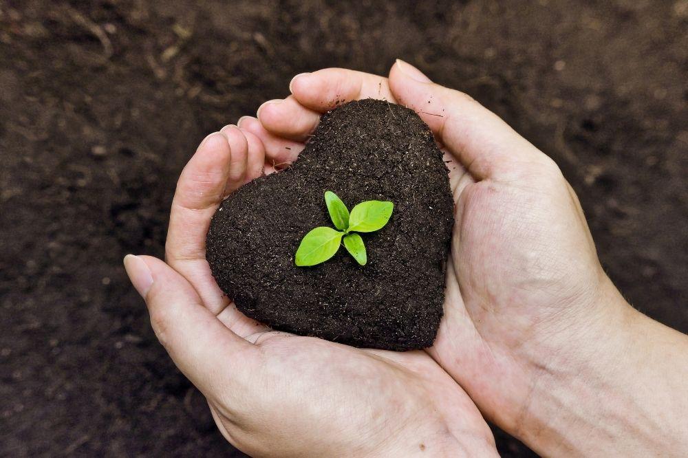 Eine Hand hält ein Herz aus Erde. Darin befindet sich eine kleine Pfalnze. Das Bild steht symbolisch für Bäume pflanzen