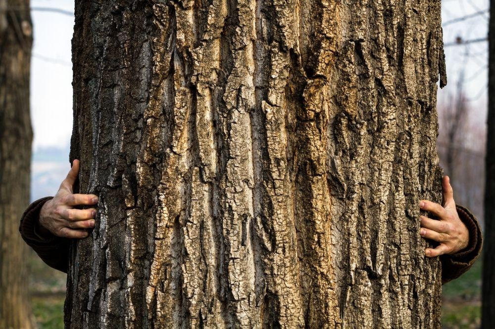 Ein dicker Stamm eines Baumes wird von zwei Händen links und rechts berührt. Die Person die den Baum umarmt ist nicht zu sehen. Dieses Bild steht symbolisch dafür Bäume zu schützen