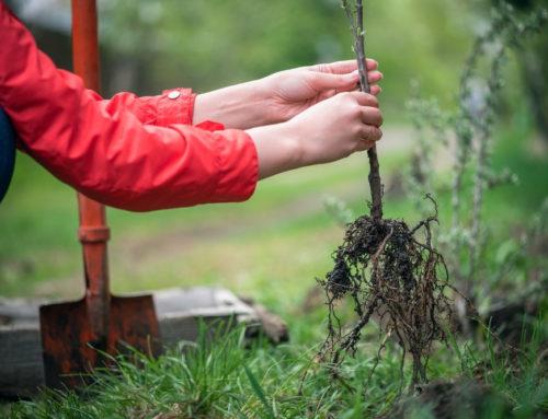 Bäume pflanzen: Darauf kannst Du achten