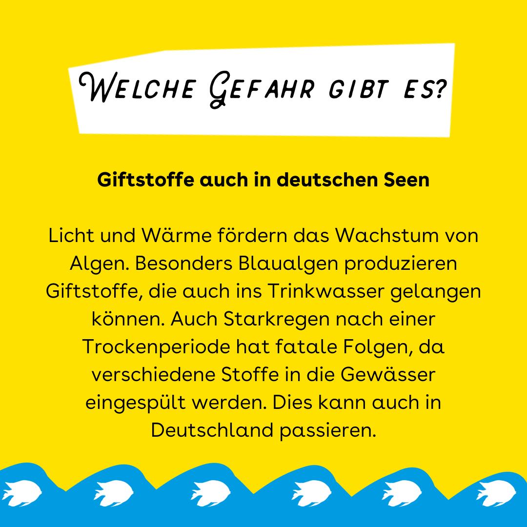 """Der Hintergrund ist gelb. Oben ist ein weißer Kasten in dem steht: Welche Gefahr gibt es? Darunter steht: """"Giftstoffe auch in deutschen Seen. Licht und Wärme fördern das Wachstum von Algen. Besonders Blaualgen produzieren Giftstoffe, die auch ins Trinkwasser gelangen können. Auch Starkregen nach einer Trockenperiode hat fatale Folgen, da verschiedene Stoffe in die Gewässer eingespült werden. Dies kann auch in Deutschland passieren."""" Unten sind blaue Wellen mit weißen Fischen."""