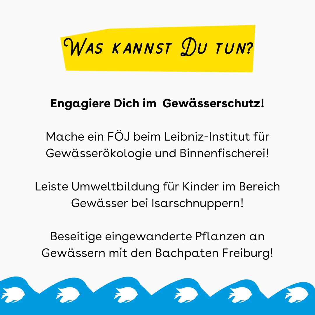 """Der Hintergrund ist weiß. Oben ist ein gelber Kasten in dem steht: """"Was kannst Du tun?"""" Darunter steht mit schwarzer Schrift: """"Engagiere Dich im Gewässerschutz! Mache ein FÖJ beim Leibniz-Institut für Gewässerökologie und Binnenfischerei! Leiste Umweltbildung für Kinder im Bereich Gewässer bei Isarschnuppern! Beseitige eingewanderte Pflanzen an Gewässern mit den Bachpaten Freiburg!"""" Unten sind blaue Wellen mit weißen Fischen."""