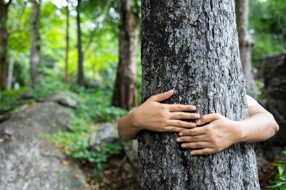 Ein Baum wird von hinten umarmt. Die Person ist nicht zu sehen, dennoch möchte sie Bäume schützen
