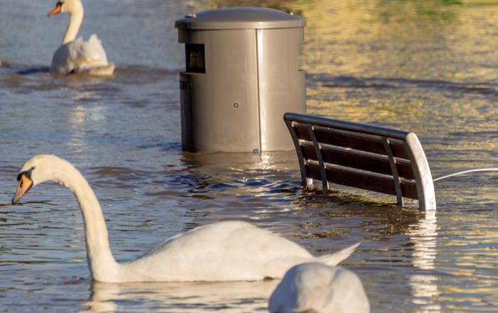 Ein Schwan schwimmt in einer überschwemmten Stadt vor einer im Wasser stehenden Bank