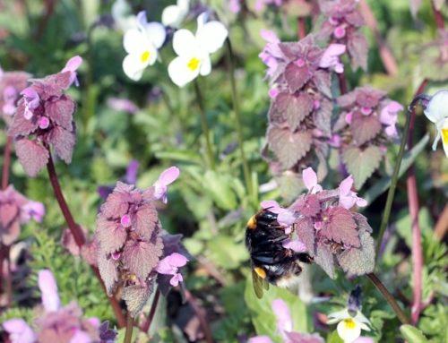 So kannst Du Wildbienen in Deinem Garten ansiedeln