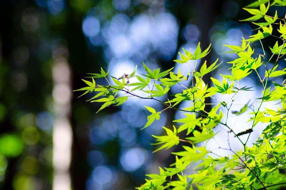 Eine Pflanze wird vom Licht der Sonne im Wald angestrahlt. Auch Du kannst diese Kraft beim Waldbaden tanken