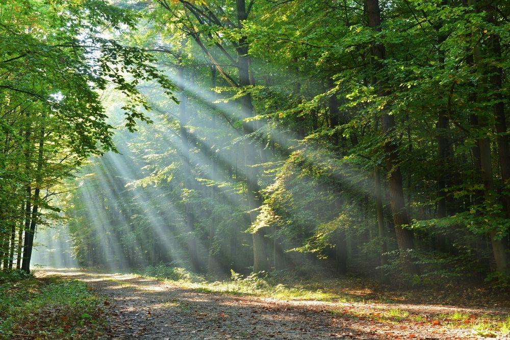 Die Sonne scheint durch die Baumkronen auf eine Lichtung im Wald. Genieße diesen Ausblick jetzt beim Waldbaden