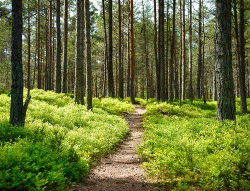 Waldbaden: So kann Dich der Wald gesund machen!