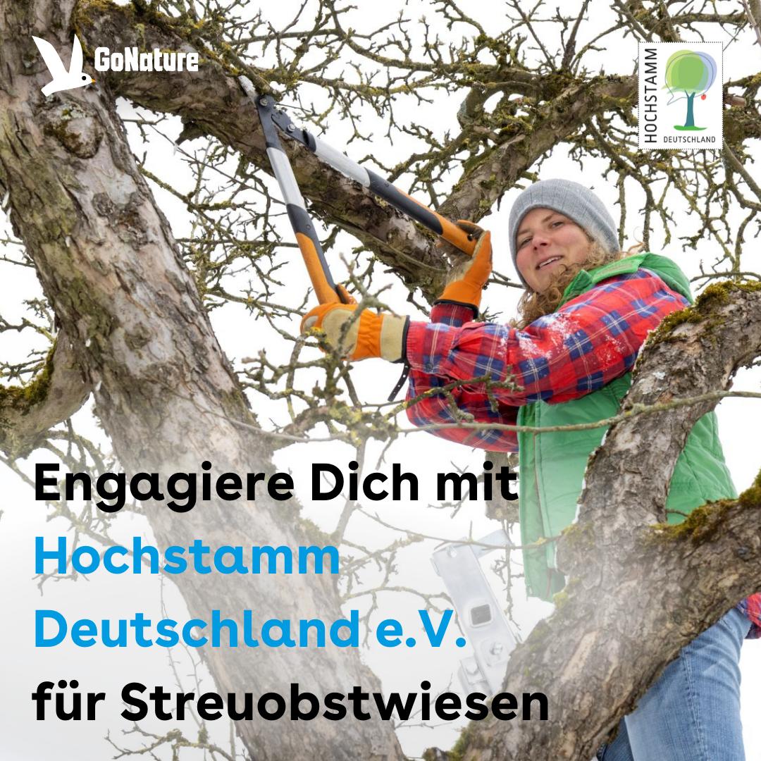 """Foto: Ein Mädchen steht in einem Baum und schneidet mit einer großen Schere Äste ab. Oben links ist das GoNature logo. Oben rechts das Hochstamm Logo. Unten Links steht: """"Engagiere Dich mit Hochstamm e.V. für Streuobstwiesen"""""""